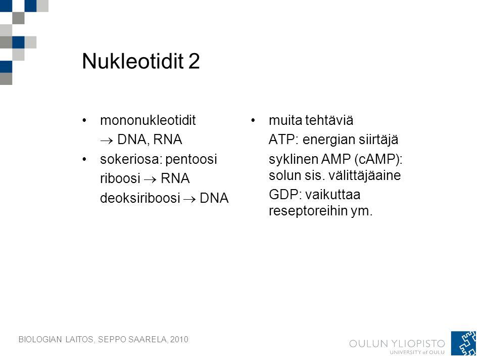 Nukleotidit 2 mononukleotidit  DNA, RNA sokeriosa: pentoosi