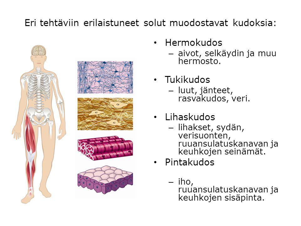 Eri tehtäviin erilaistuneet solut muodostavat kudoksia: