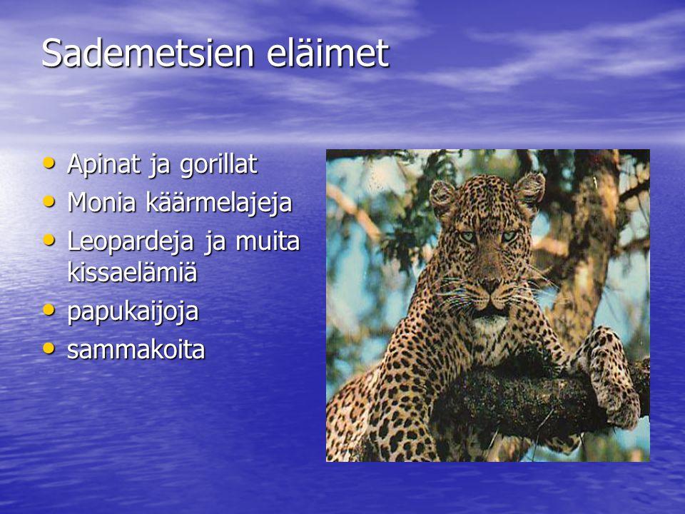 Sademetsien eläimet Apinat ja gorillat Monia käärmelajeja