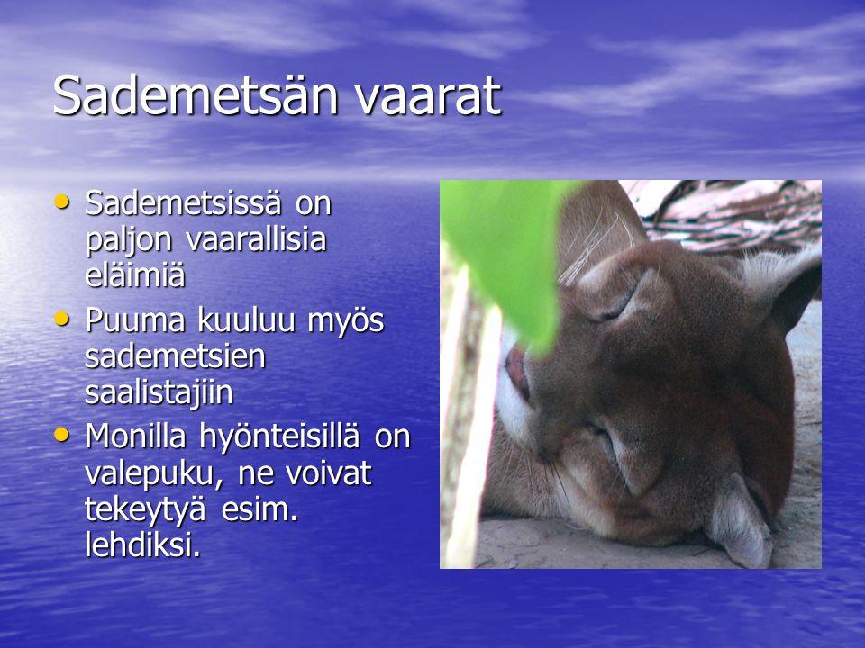 Sademetsän vaarat Sademetsissä on paljon vaarallisia eläimiä