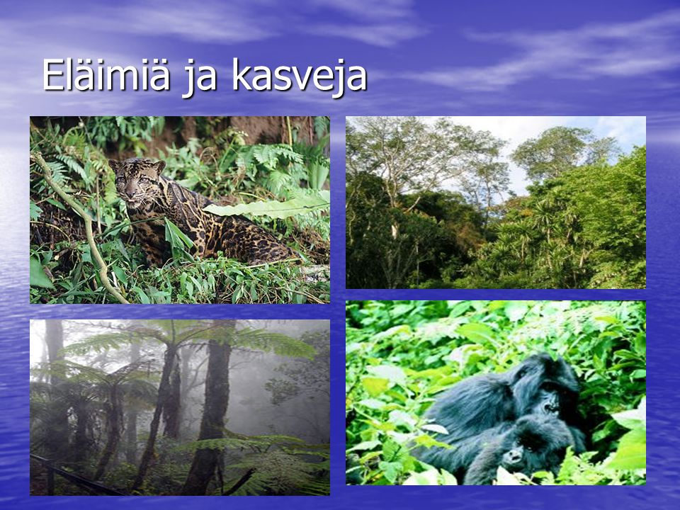 Eläimiä ja kasveja
