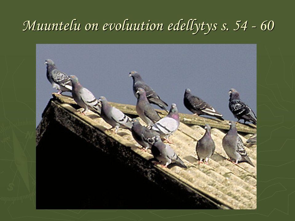 Muuntelu on evoluution edellytys s. 54 - 60