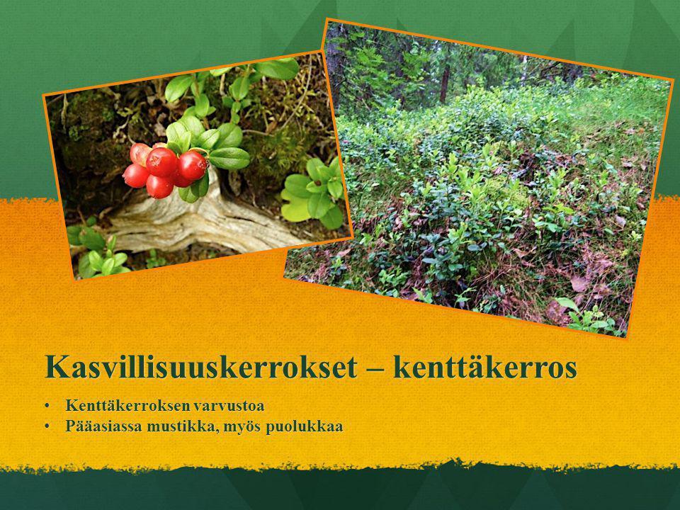 Kasvillisuuskerrokset – kenttäkerros