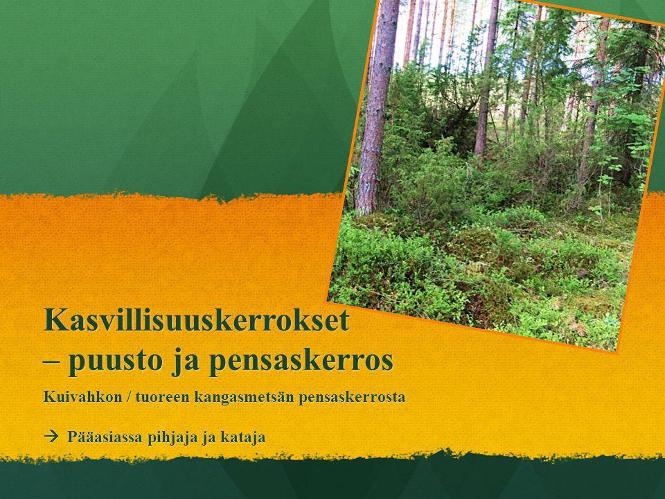 Kasvillisuuskerrokset – puusto ja pensaskerros