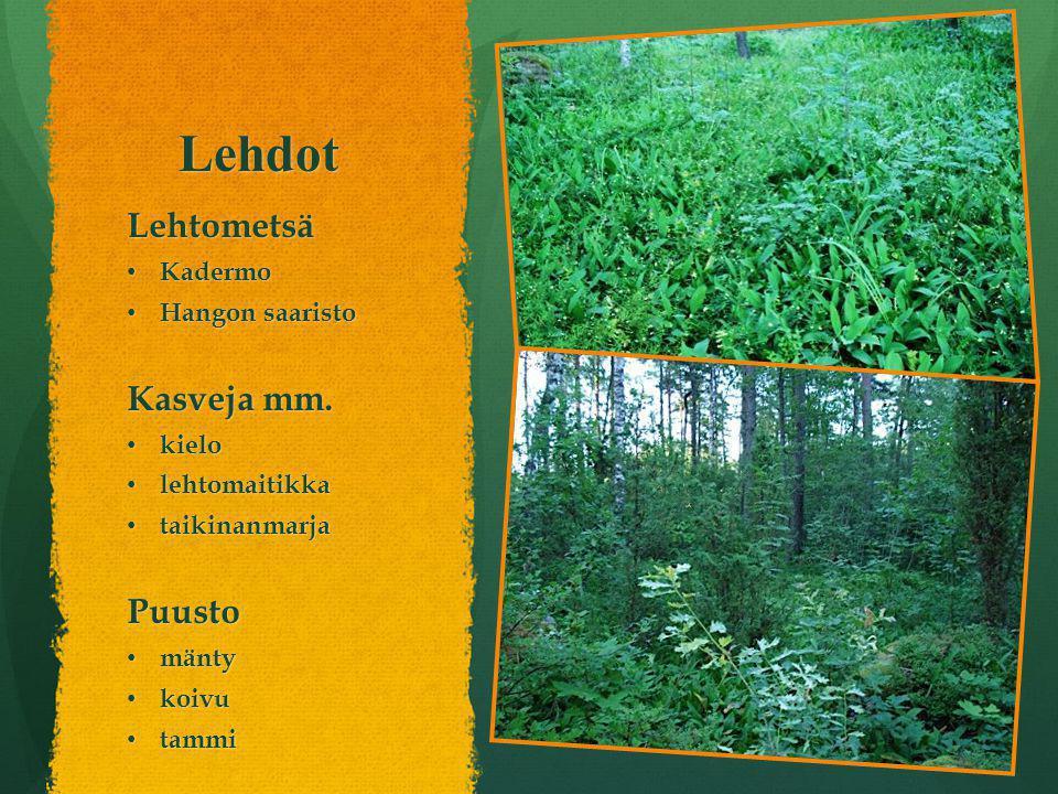 Lehdot Lehtometsä Kasveja mm. Puusto Kadermo Hangon saaristo kielo
