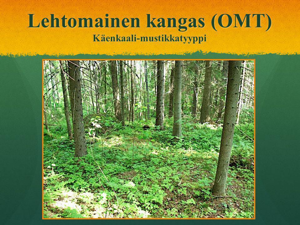 Lehtomainen kangas (OMT) Käenkaali-mustikkatyyppi