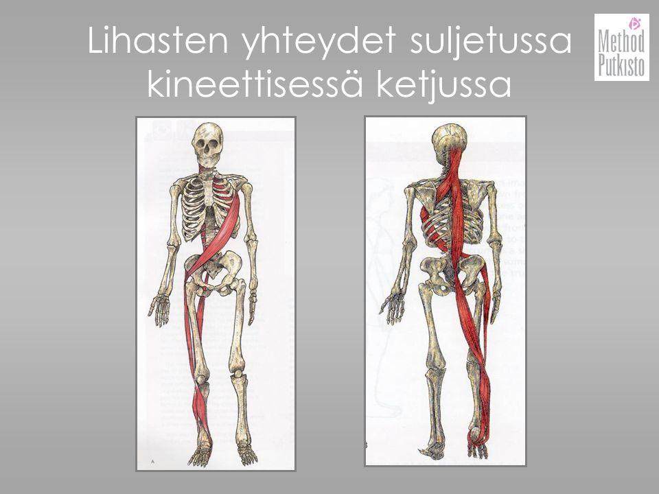Lihasten yhteydet suljetussa kineettisessä ketjussa