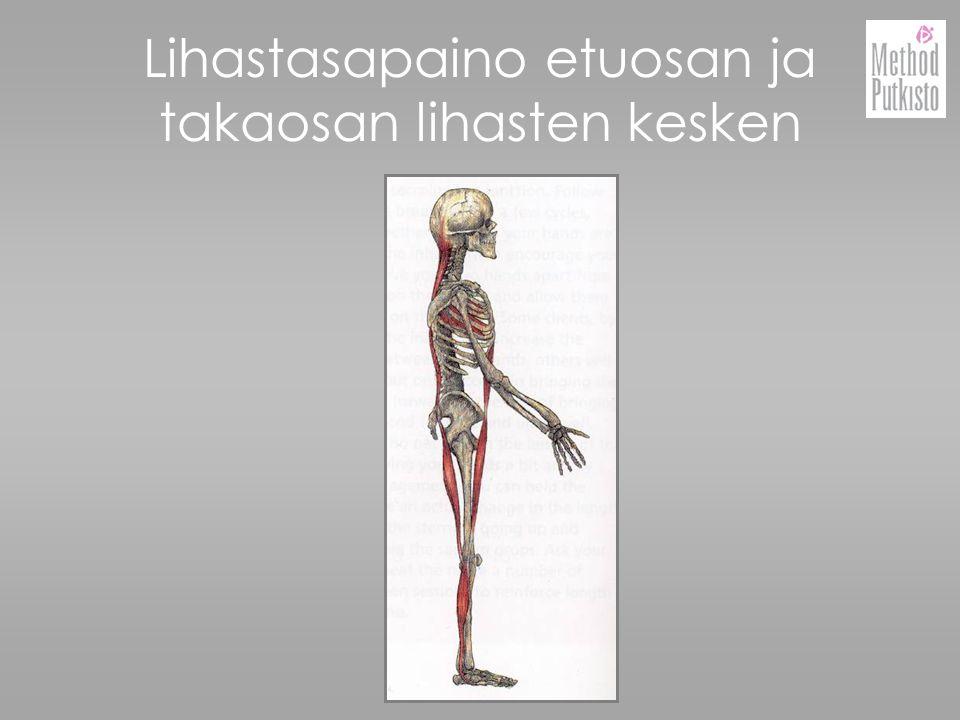 Lihastasapaino etuosan ja takaosan lihasten kesken