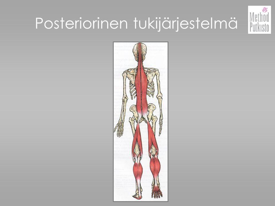 Posteriorinen tukijärjestelmä