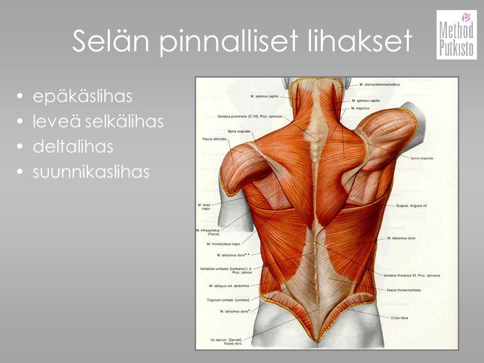 Selän pinnalliset lihakset