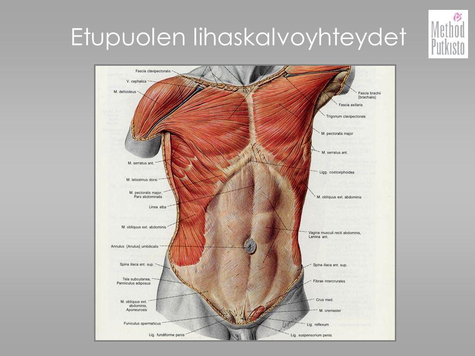 Etupuolen lihaskalvoyhteydet