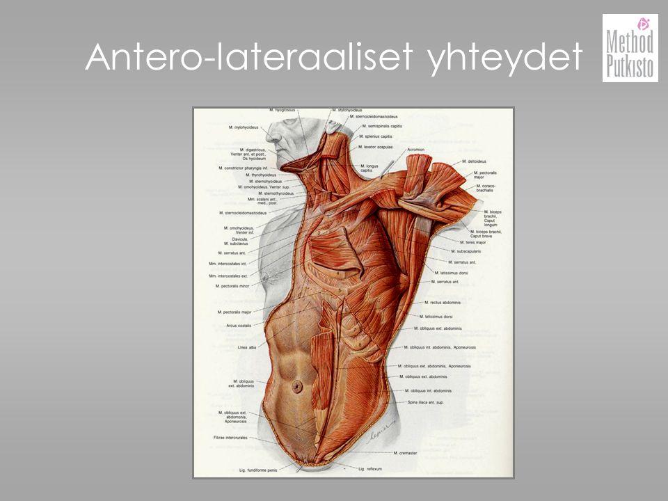 Antero-lateraaliset yhteydet