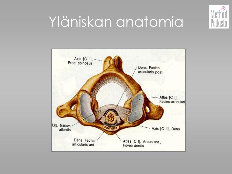 Yläniskan anatomia
