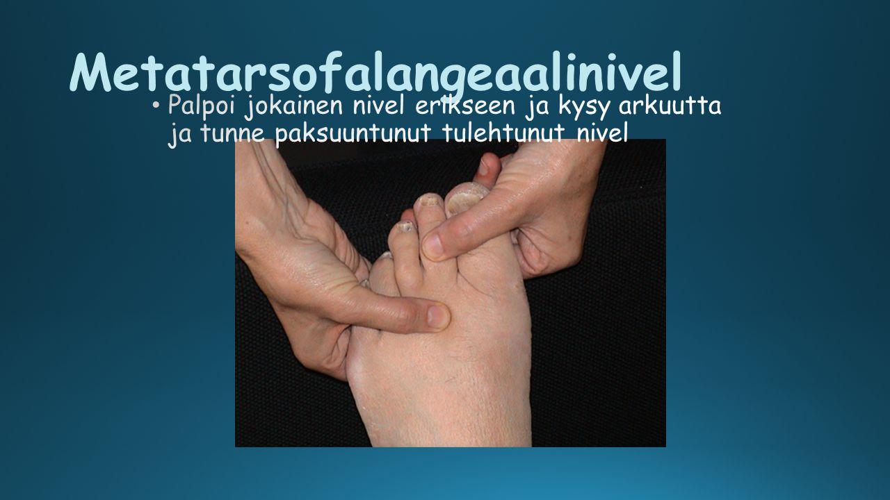 Metatarsofalangeaalinivel