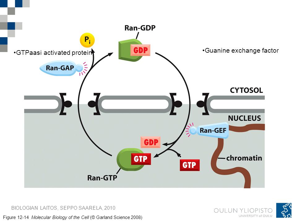 Guanine exchange factor GTPaasi activated protein