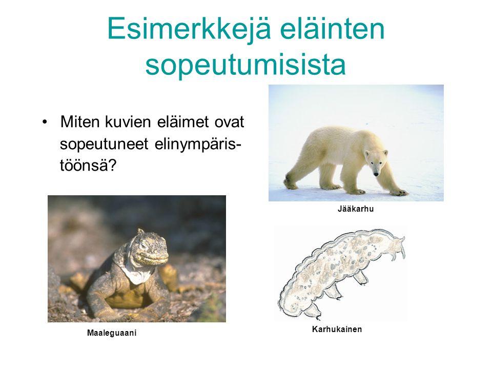 Esimerkkejä eläinten sopeutumisista