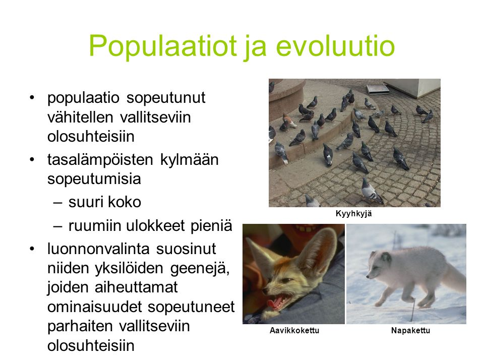 Populaatiot ja evoluutio