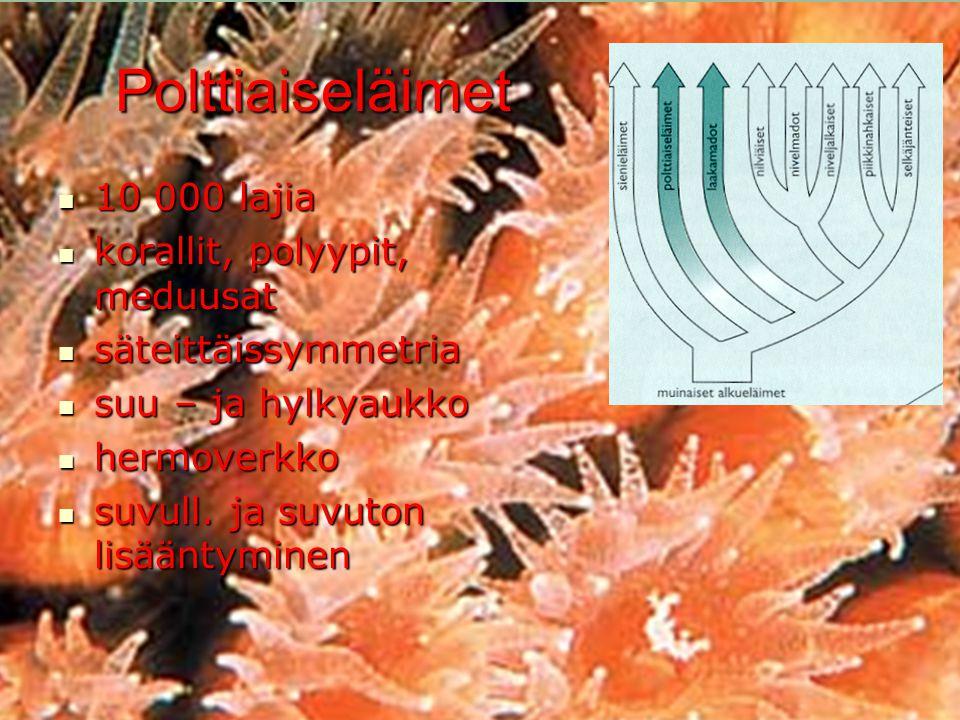 Polttiaiseläimet 10 000 lajia korallit, polyypit, meduusat