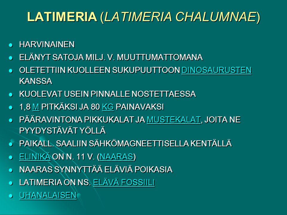 LATIMERIA (LATIMERIA CHALUMNAE)
