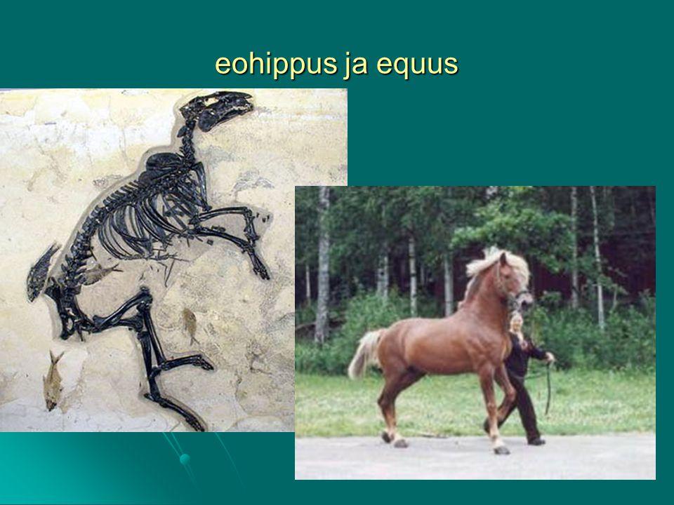 eohippus ja equus