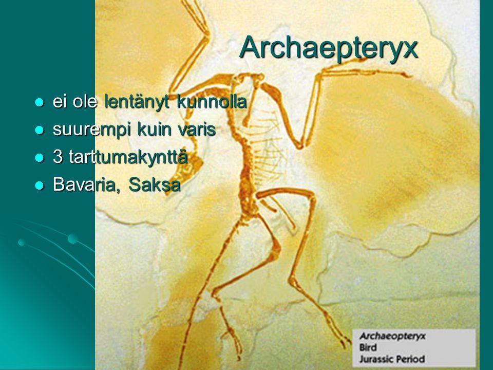 Archaepteryx ei ole lentänyt kunnolla suurempi kuin varis