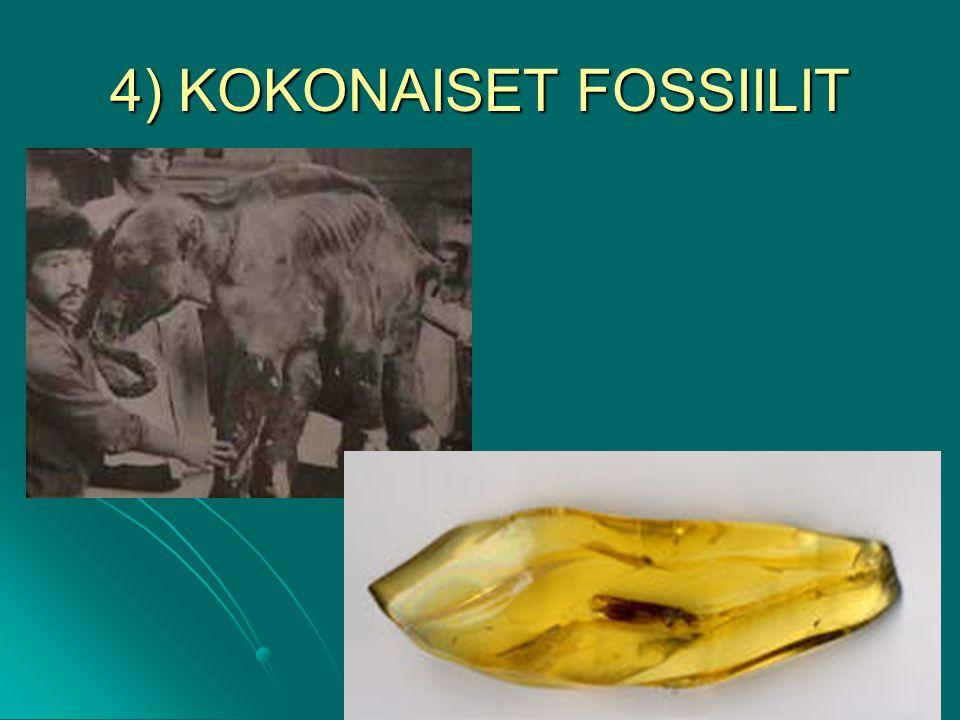 4) KOKONAISET FOSSIILIT