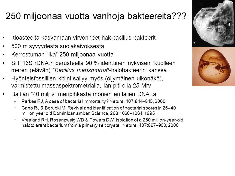 250 miljoonaa vuotta vanhoja bakteereita