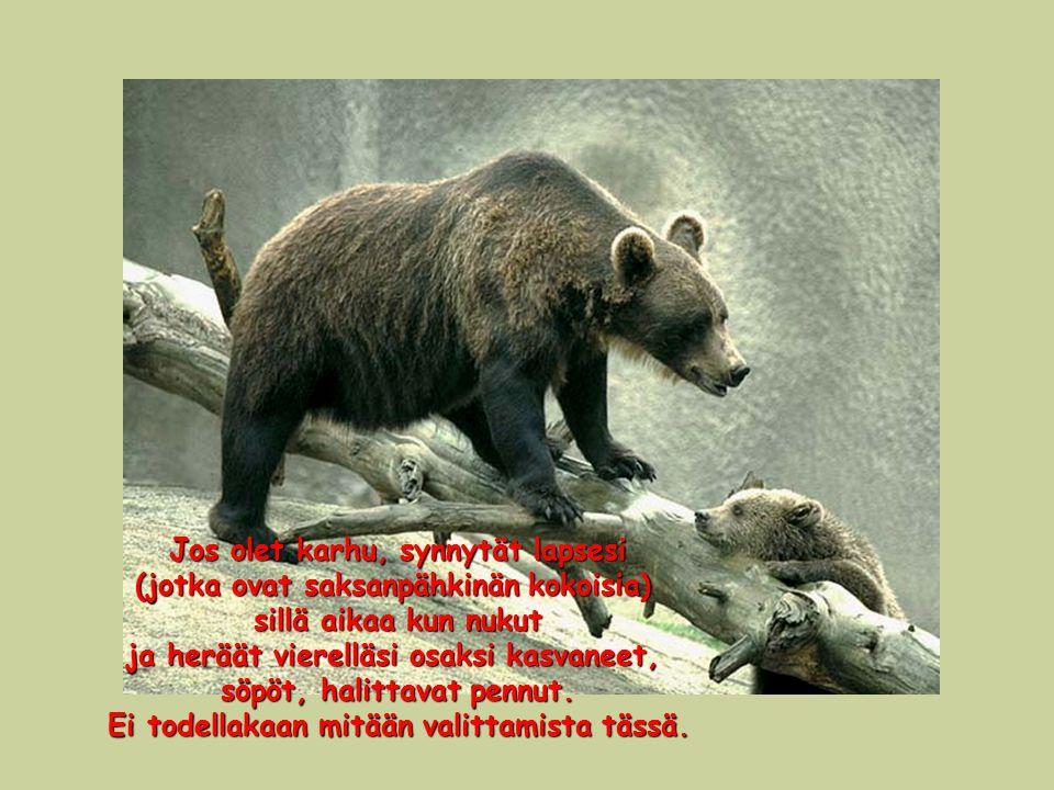 Jos olet karhu, synnytät lapsesi (jotka ovat saksanpähkinän kokoisia)