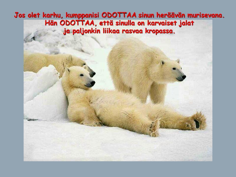 Jos olet karhu, kumppanisi ODOTTAA sinun heräävän murisevana