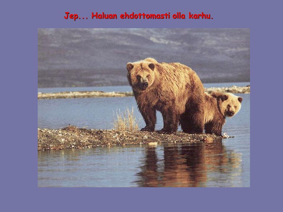 Jep... Haluan ehdottomasti olla karhu.