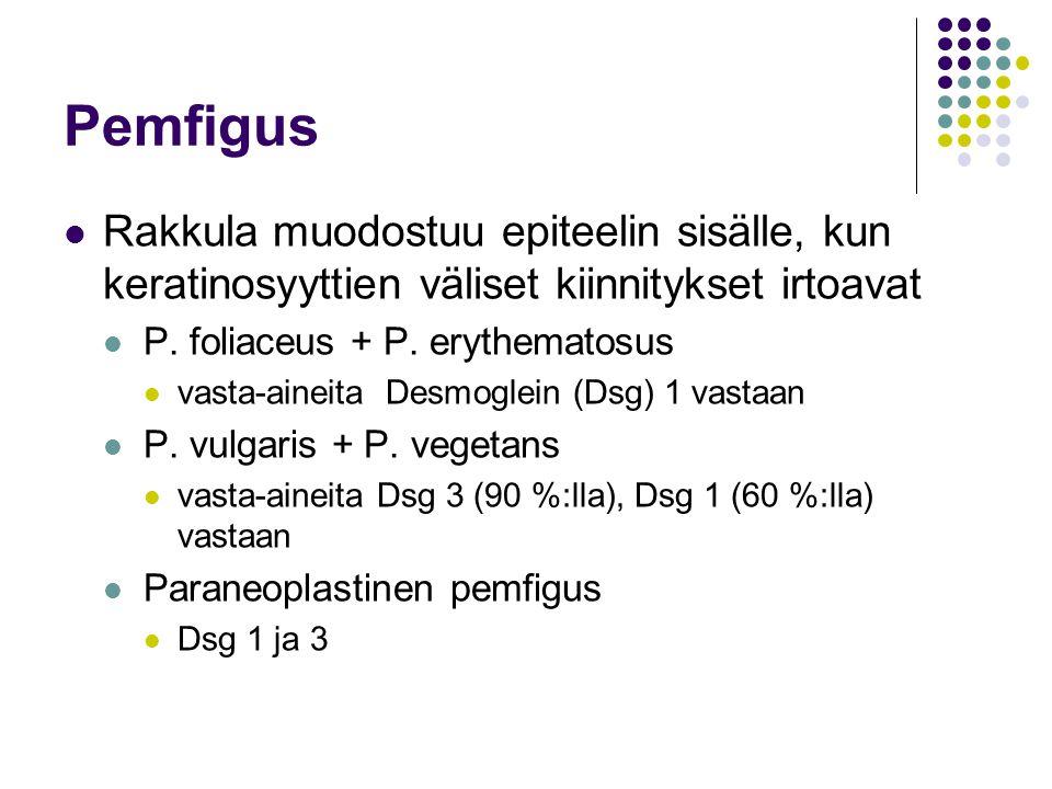 Pemfigus Rakkula muodostuu epiteelin sisälle, kun keratinosyyttien väliset kiinnitykset irtoavat. P. foliaceus + P. erythematosus.