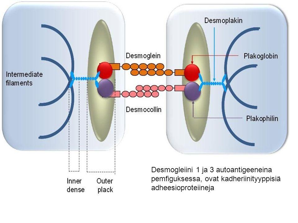 Desmogleiini 1 ja 3 autoantigeeneina