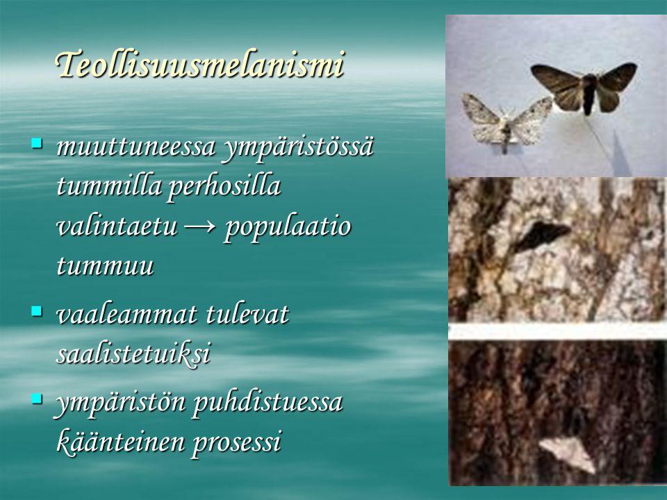 Teollisuusmelanismi muuttuneessa ympäristössä tummilla perhosilla valintaetu → populaatio tummuu. vaaleammat tulevat saalistetuiksi.