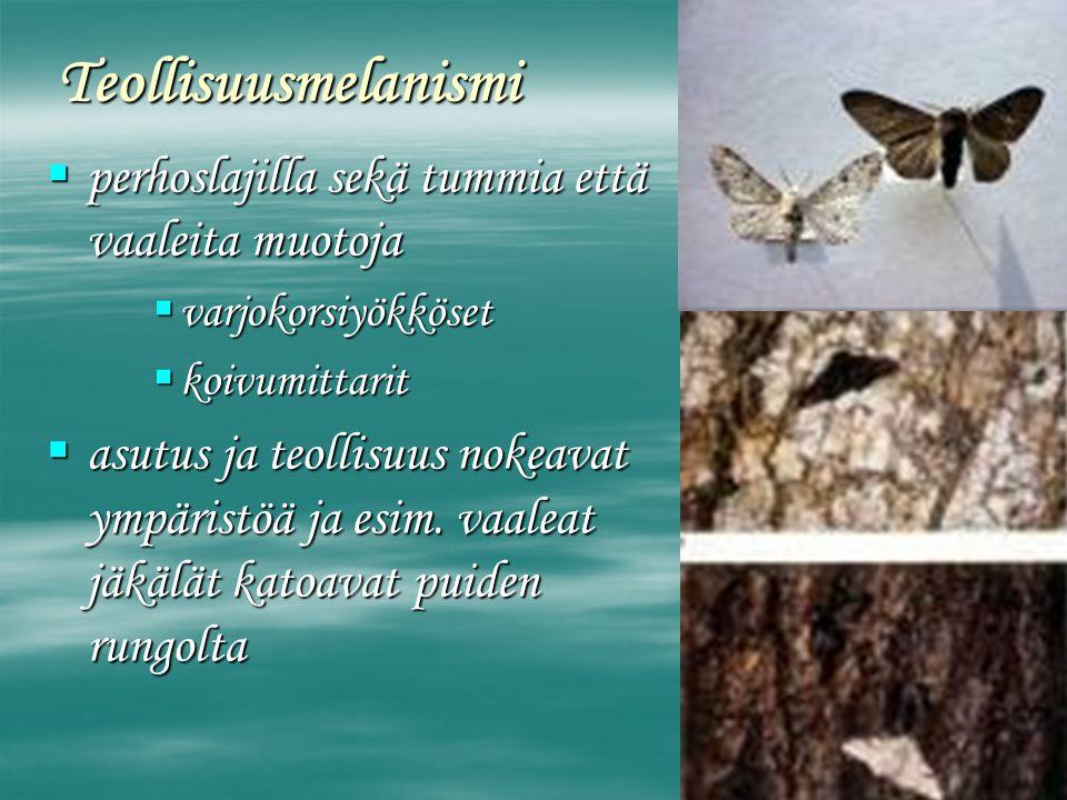 Teollisuusmelanismi perhoslajilla sekä tummia että vaaleita muotoja