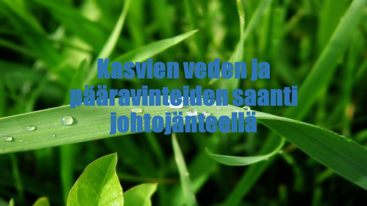 Kasvien veden ja pääravinteiden saanti johtojänteellä