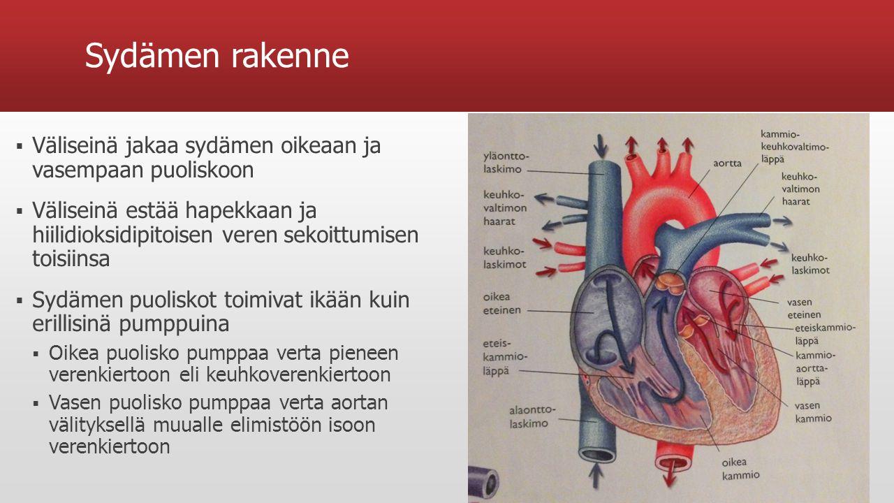 Sydämen rakenne Väliseinä jakaa sydämen oikeaan ja vasempaan puoliskoon.