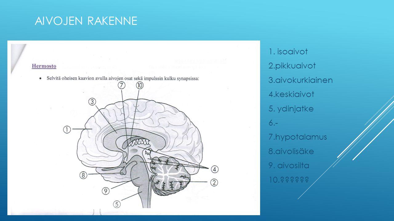 Aivojen rakenne 1. isoaivot 2.pikkuaivot 3.aivokurkiainen 4.keskiaivot