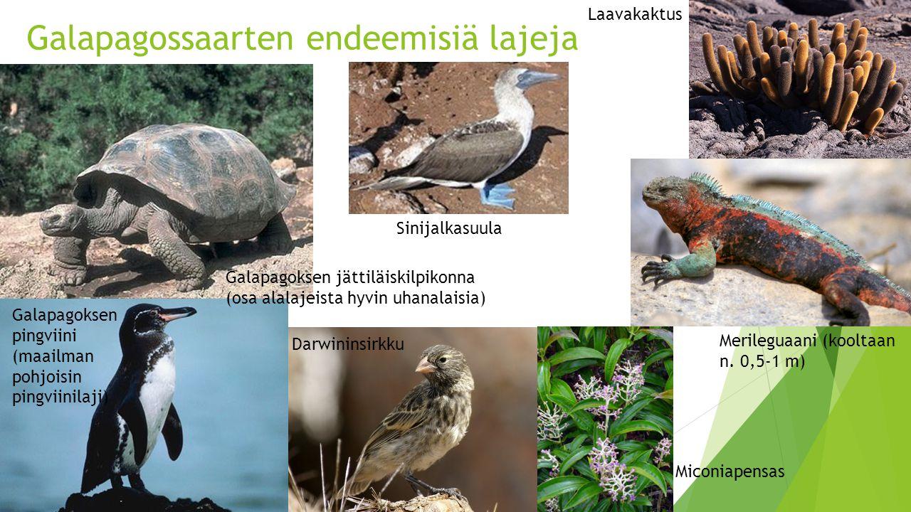 Galapagossaarten endeemisiä lajeja