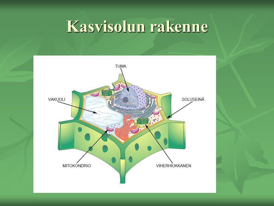 Kasvisolun rakenne