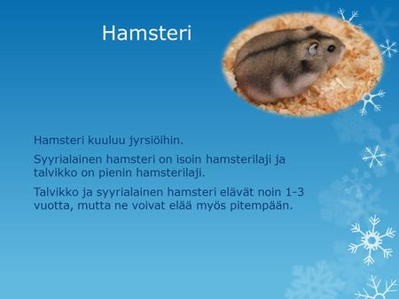 Hamsteri aikuinen vid