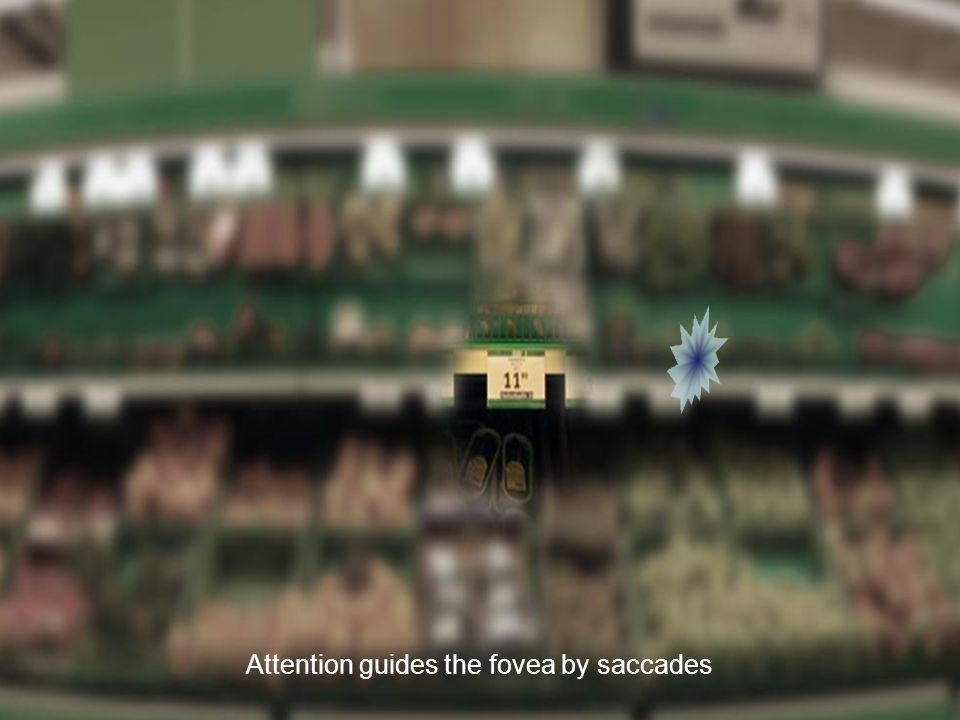 Attention guides the fovea by saccades