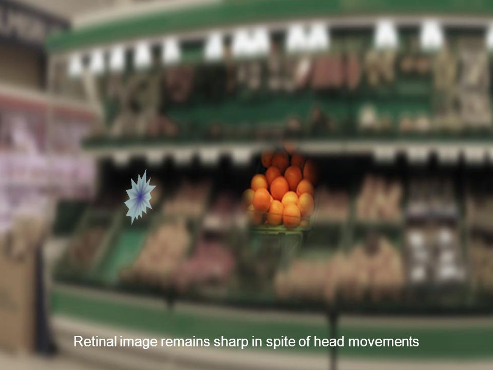 Retinal image remains sharp in spite of head movements